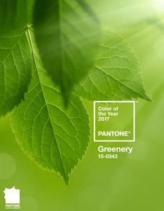 culoarea-anului-2017-greenery